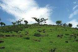 Amhara Region (2012)